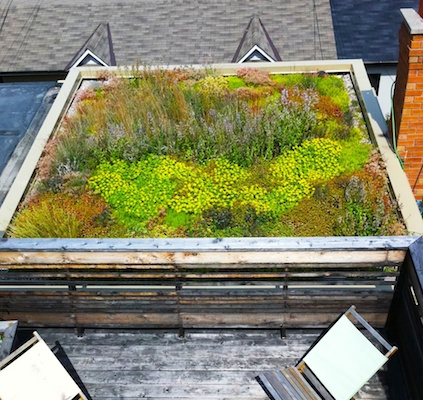West Queen West Green Roof