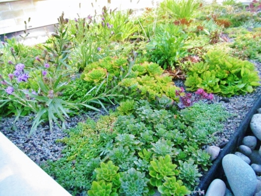 The Kingsway green roof