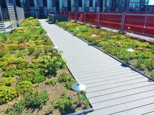 YMCA green roof