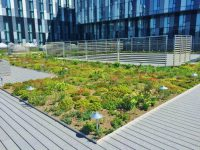 YMCA green roof