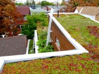 Little Italy Green Roof
