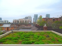 West Queen West Green Roof