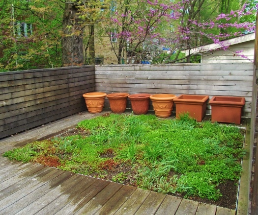 Forest Hill Green Roof